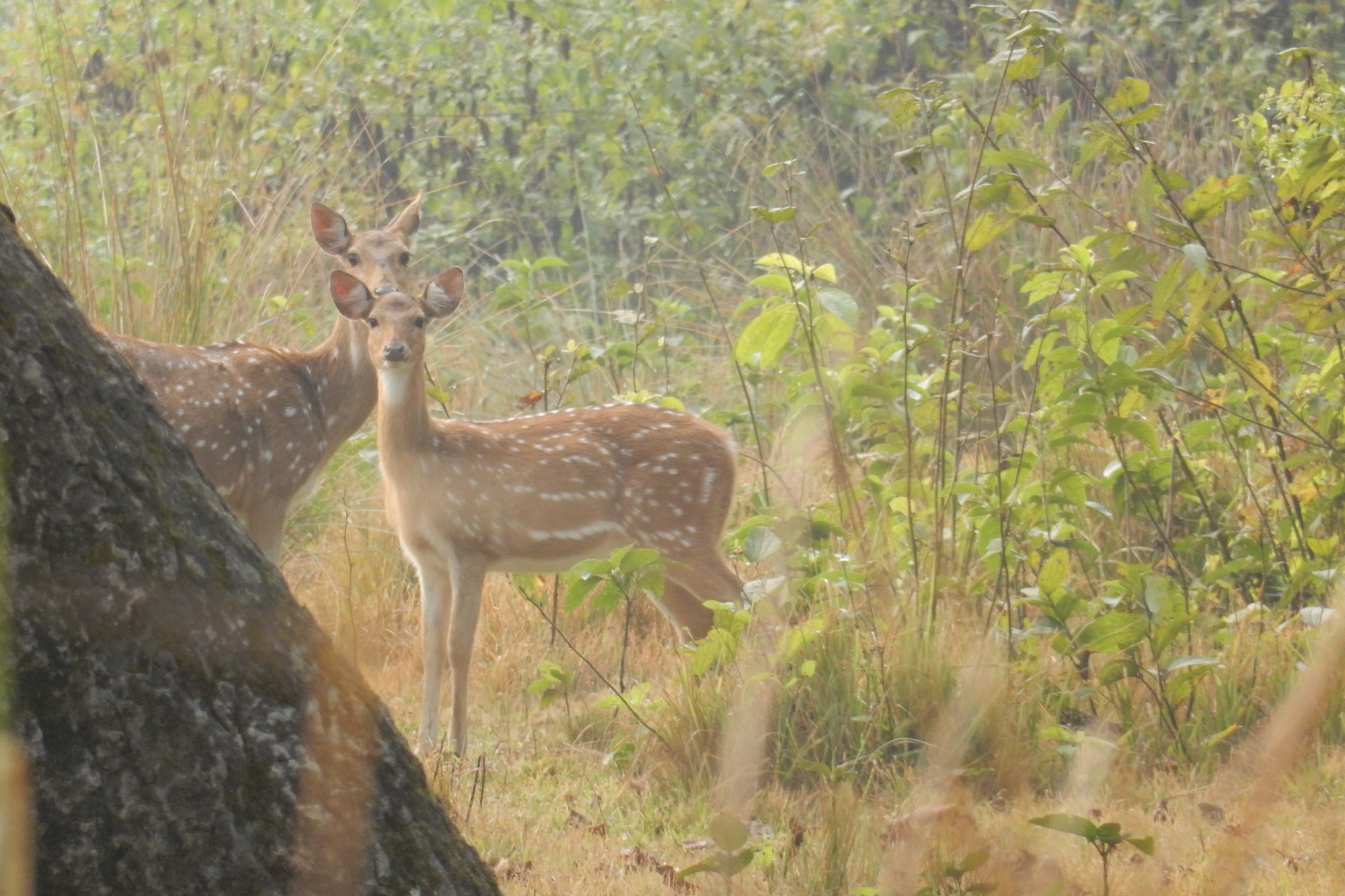 Bardia National Park – 1 Night / 2 Days Package